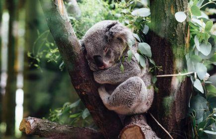 Екскурзия Австралия, Нова Зеландия и Фиджи