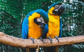 Бразилия, Аржентина, Чили и Перу - Тайните на Латинска Америка